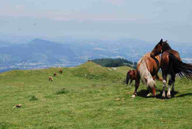 Horses in the Pyrenees
