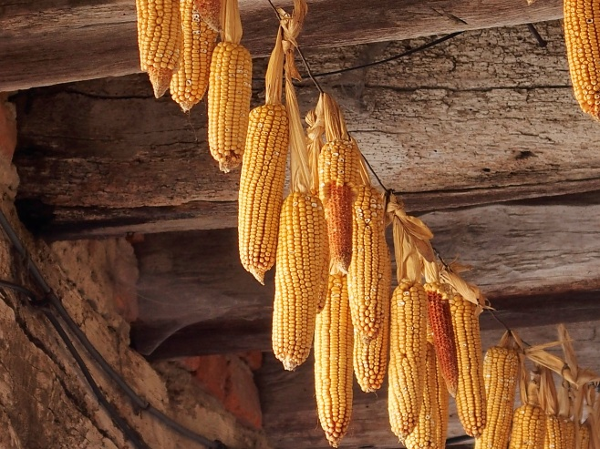 Maize hung from the rafters; used to keep flies outside